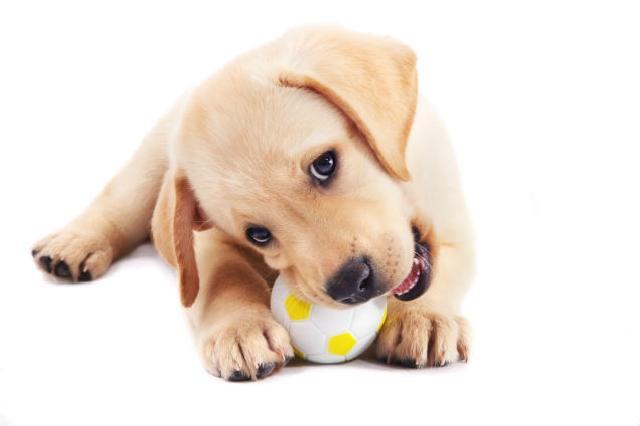 Seguros de gastos médicos para mascotas